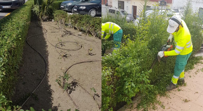 mantenimiento de las zonas verdes y arbolado viario del municipio