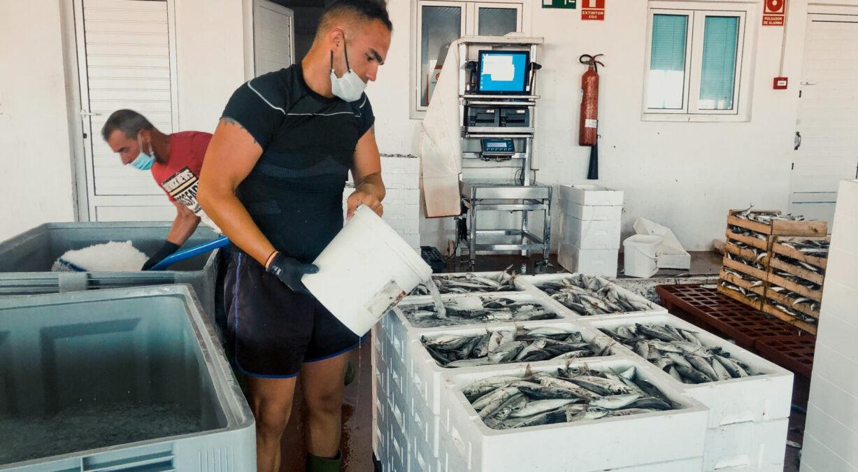 trabajo lonja pesquera