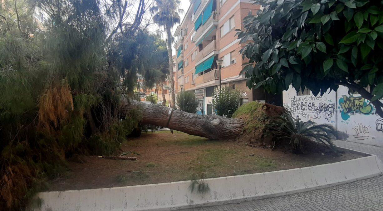 árbol cae en Motril