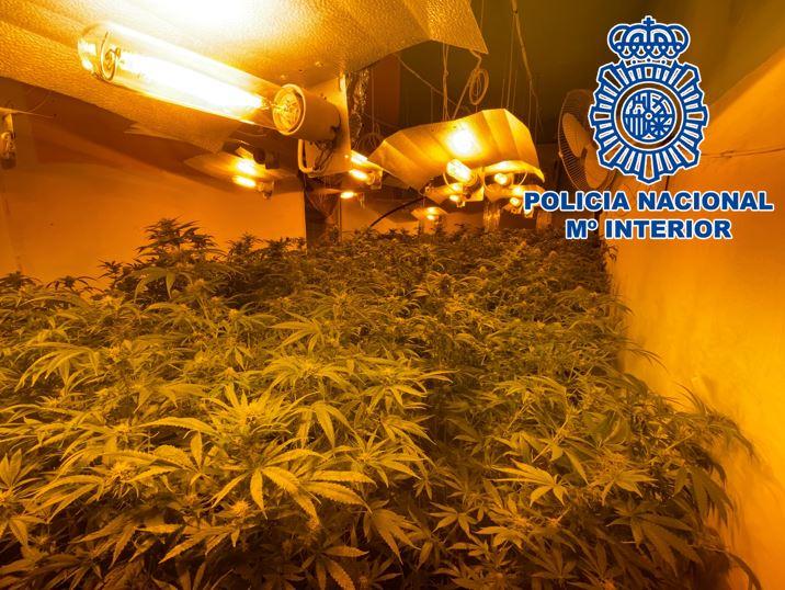 Plantacion marihuana en Motril