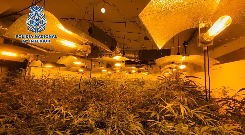 Plantación de marihuana en Motril